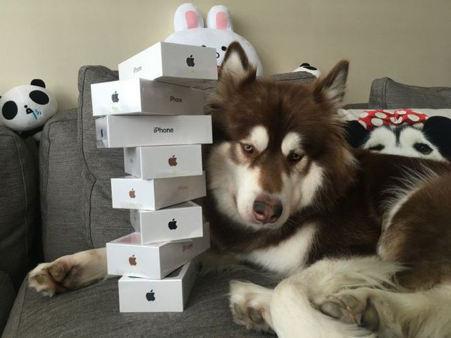 Chinese heir buys his dog over $6,000 worth of iPhones - CNET