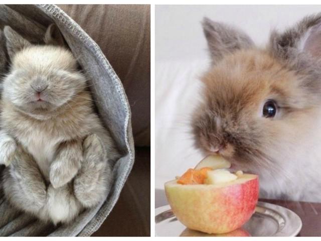 Top 20 des lapins les plus mignons de l'Histoire, les petites douceurs d'Instagram