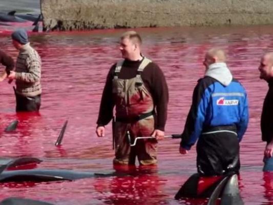 Massacre de dauphins aux îles Féroé : les militants écologistes crient au scandale