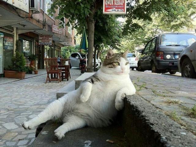 Top 25 des animaux assis comme des humains, à la cool