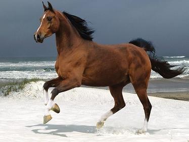 La spiaggia di Marina di Ardea è ora accessibile, al di fuori degli orari di balneazione, ai cavalli al trotto.