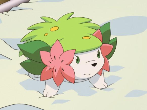 Il Pokémon Shaymin disponibile da oggi tramite Dono Segreto