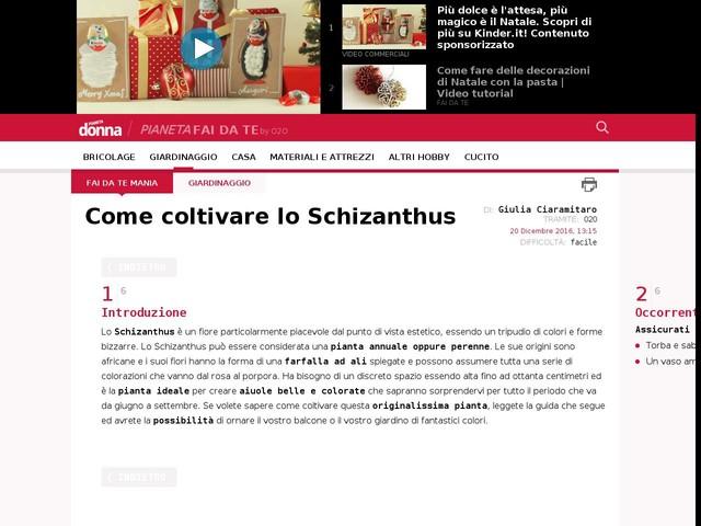 Come coltivare lo Schizanthus