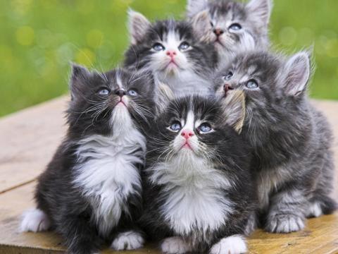 Festa del gatto 2016, Miao day: le origini e la programmazione