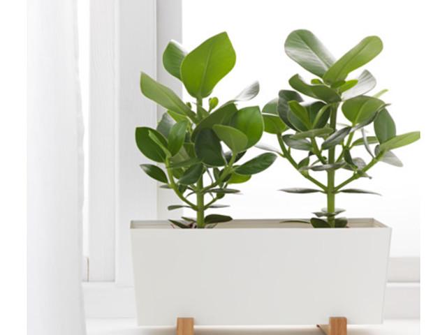 Nuove collezioni fioriere IKEA