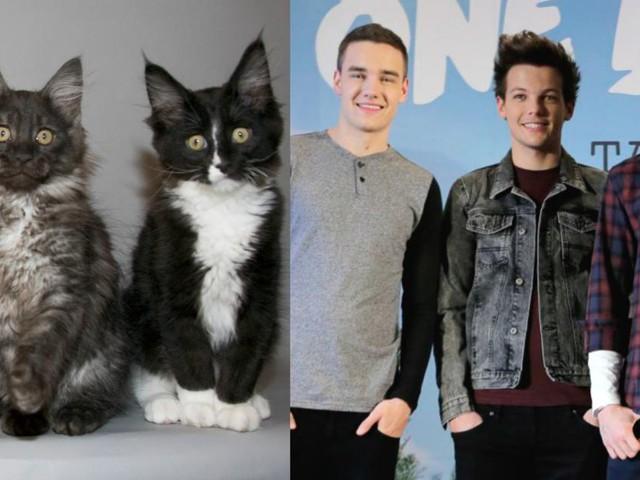 One Direction: Zayn Malik, Louis Tomlinson & co. si trasformano in teneri gattini (GIF)