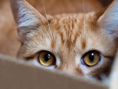 """Parlare il """"gattese"""" si può: un libro insegna a comunicare con i gatti"""