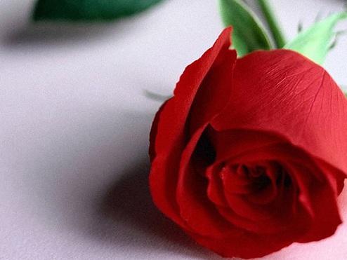Frasi e foto di San Valentino per Whatsapp: le più belle