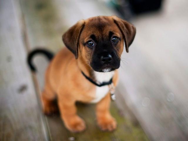 Evita il reato di imbrattamento il proprietario del cane subito pronto a ripulire i bisogni dell'animale.