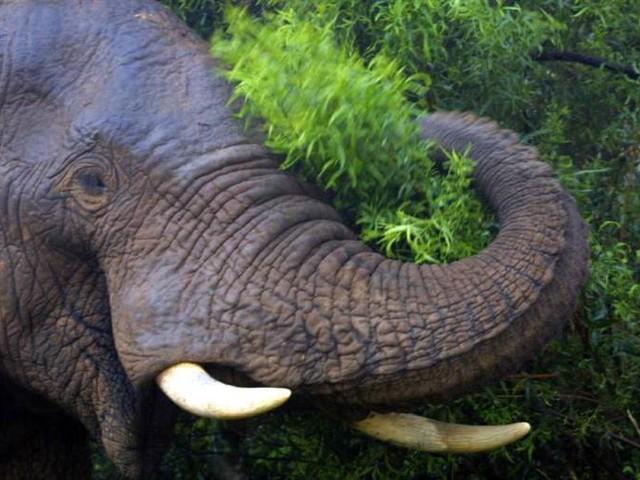 Djur på Zoo för feta – tvingas till diet