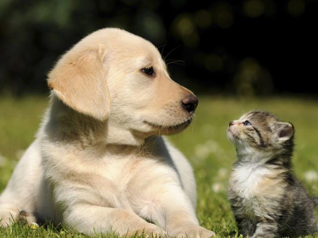 Dog Adoption Network