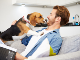 Dog Bite Insurance California