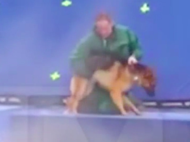Leaked Video From 'A Dog's Purpose' Set Calls Film's Treatment Of Animals Into Question