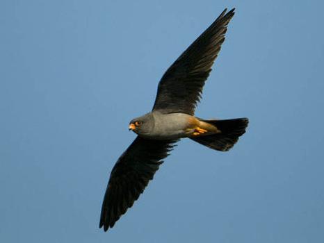 2014 Birdcrime report reveals extent of damage to Britain's rare birdlife