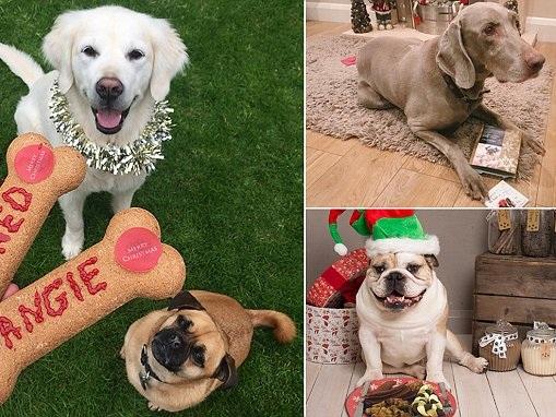Tesco S Pet Dog Christmas Pudding Jumper