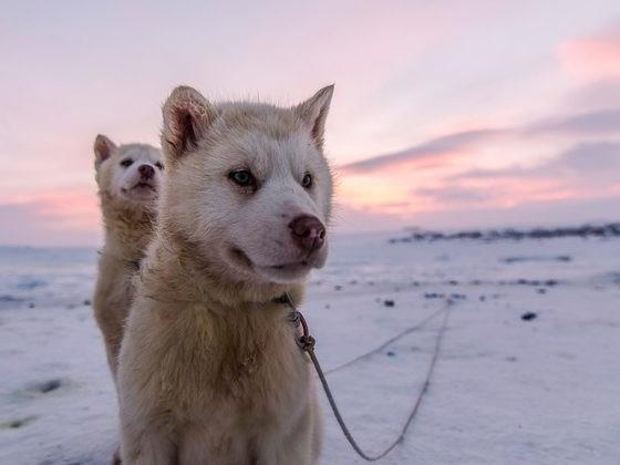 Dog Adoption Ages