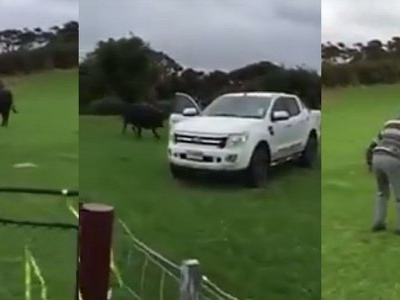81-Year-Old Grandad Fights Huge Black Bull to Save Ford Ranger Pickup