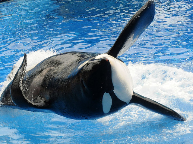 CEO Offers $1 Million Toward Sanctuary, Asks SeaWorld To Free One Orca