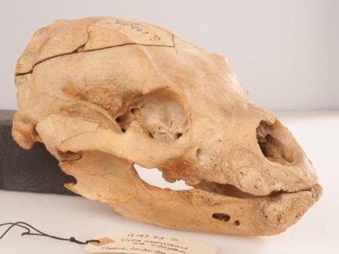 Winnie The Pooh's Skull Is Here To Destroy Your Childhood