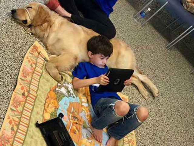 VIDEO: Boy with autism meets new service dog, bonds instantly