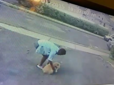 Video captures woman stealing dog from driveway in New Jersey