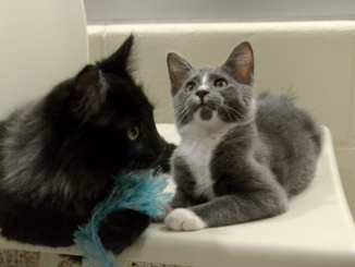 With 'Guide Cat' Best Friend, Blind Kitten Will Never Be Lost