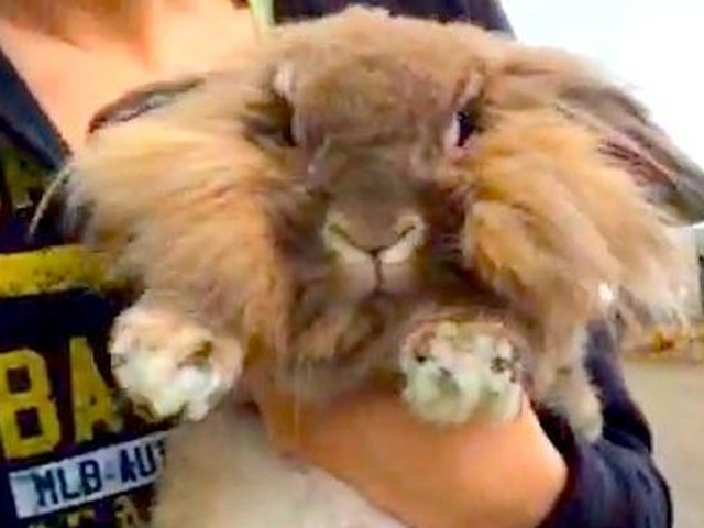 Rabbit Gets Depressed After His Family Returns Him To The Shelter
