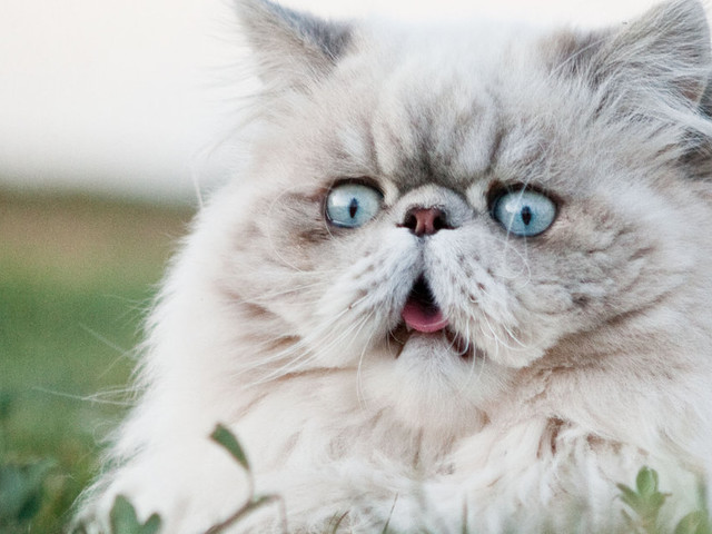No, A Study Did NOT Find That Your Cat Wants To Kill You